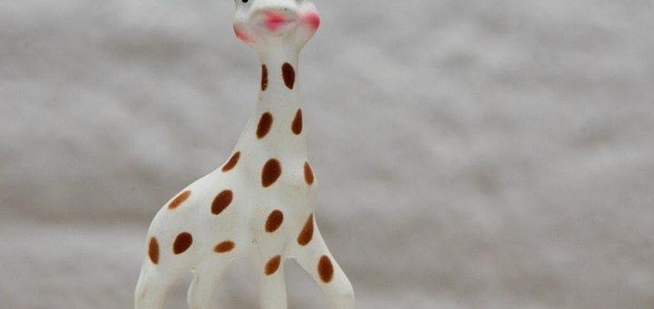 Focus sur Sophie la girafe la star Française des girafe